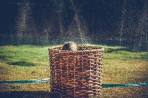 Дети играют с брызгами воды
